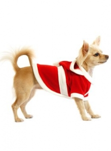 chihuahua christmas outfit